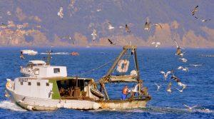 peschereccio pesca