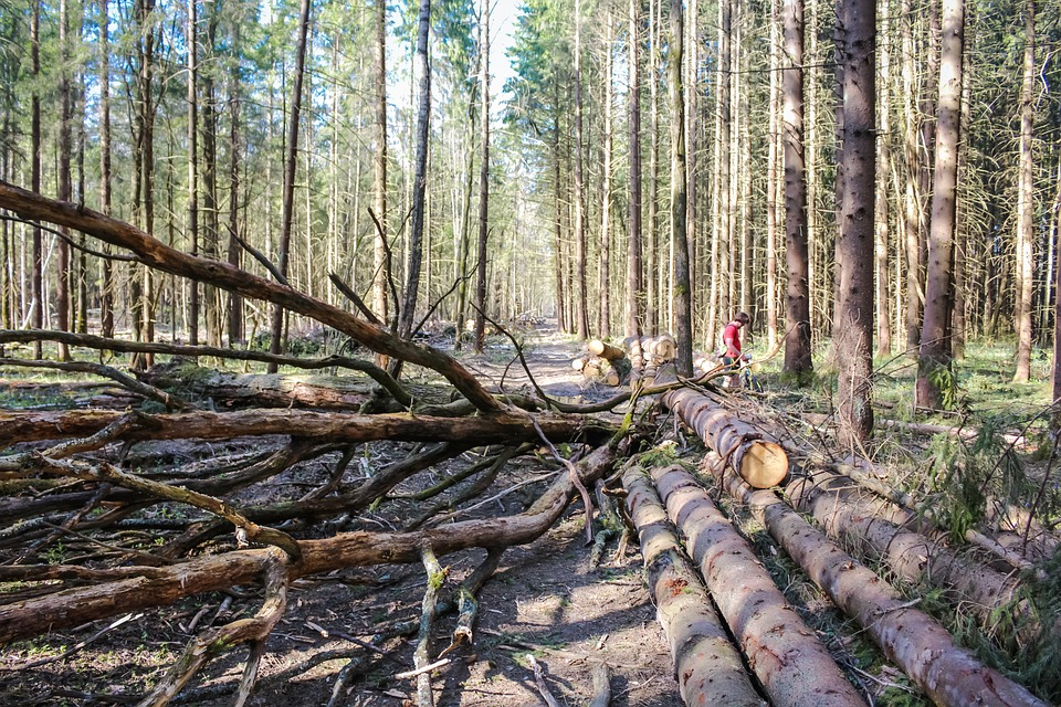 Taglio del bosco nuove regole per gli operatori del for Ditte traslochi livorno