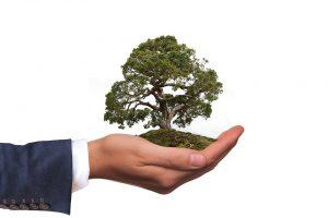 albero piantumazione ambiente