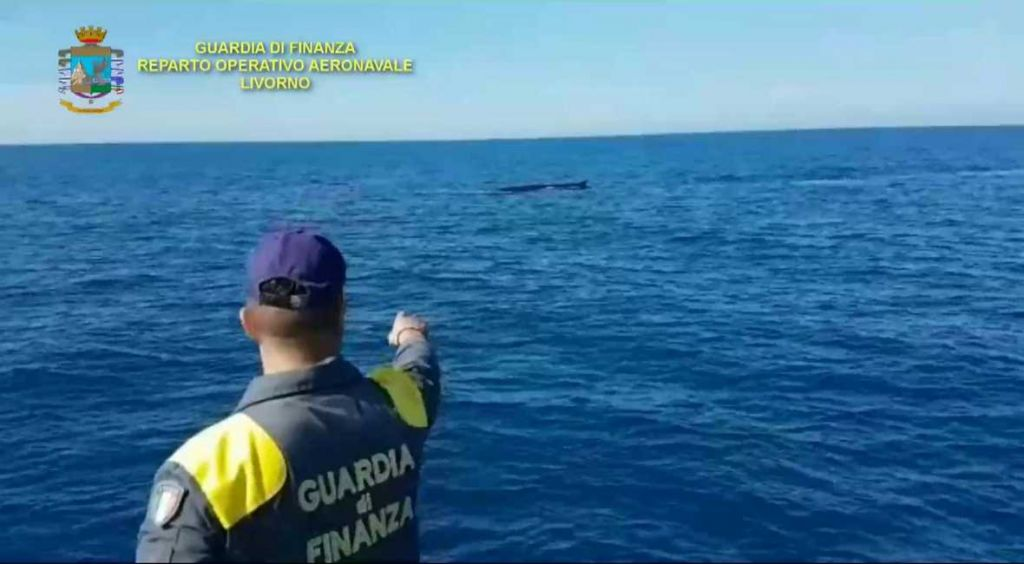Avvistate balenottere al lago dell'isola d'Elba