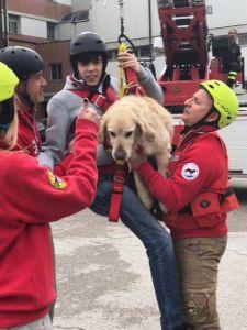 Disabilità, riconoscimento Colombo per l'attività con i cani da salvataggio