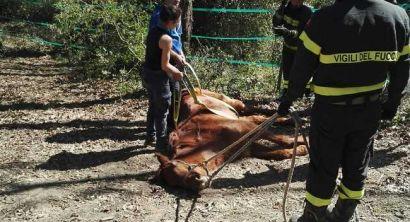 Cavalla caduta salvata dai vigili del fuoco (4)