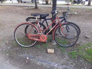 Biciclette legate ad un albero