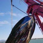 LivornoPress - Calambrone recuperato relitto che rappresentava un pericolo per la navigazione