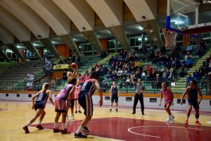 LivornoPress Jolly Acli Basket 10-20