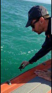 Castagneto Carducci, salvato piccolo esemplare di tartaruga marina
