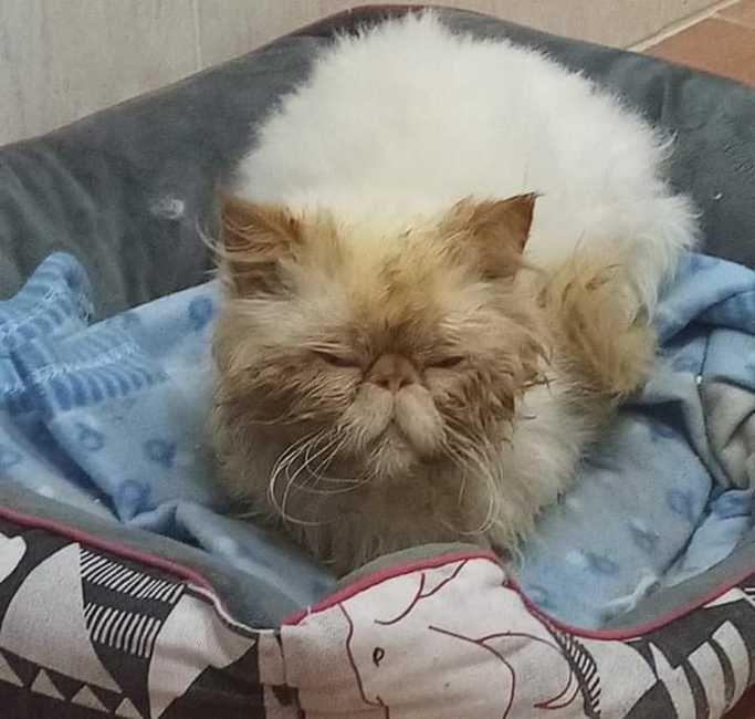gatto maltrattato in cerca di adoxione
