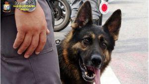 guardia di finanza 117 cane anti droga