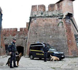 guardia di finanza cani antidroga 117