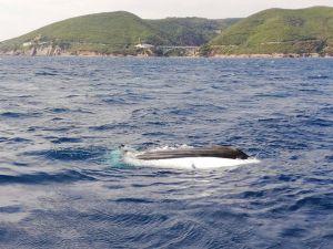 Calignaia, barca rovesciata