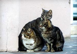 gatti_selvatici