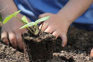 pianta, orto giardianaggio piantumazione