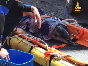 Mamma delfino spiaggiata e piccolo in difficoltà. L'inutile corsa per il salvataggio