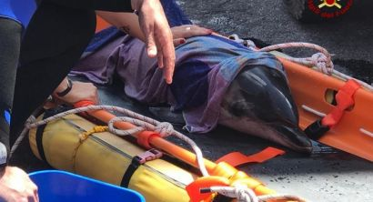 Mamma delfino spiaggiata e piccolo in difficoltà. L'inutile corsa per il salvataggio (6)