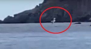 foca monaca isola di capraia