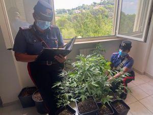 Carabinieri arrestano due coltivatori di marijuana