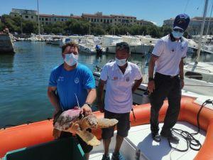 Dopo le cure torna in mare la tartaruga Nanuk