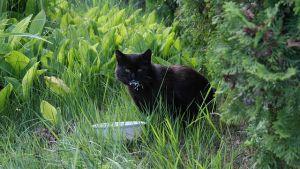 gatto, giardino ciotola