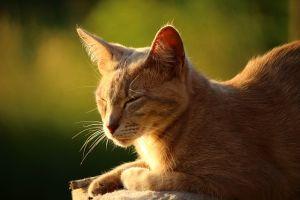 gatto sole