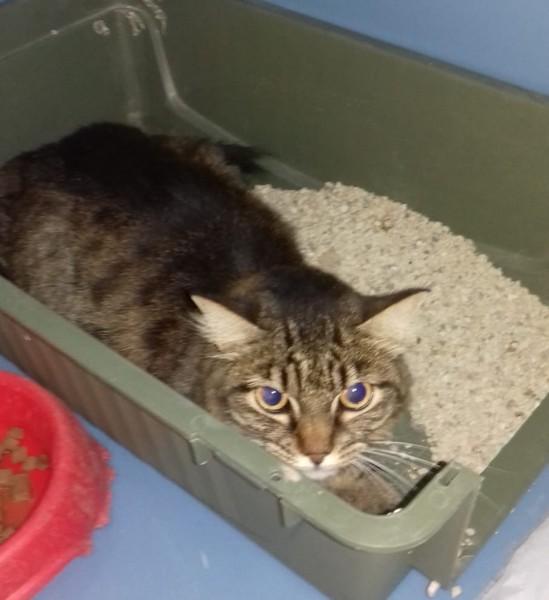 Ritrovata gatta ferita, la Tutela Animali cerca proprietario o qualcuno disposto a prendersene cura
