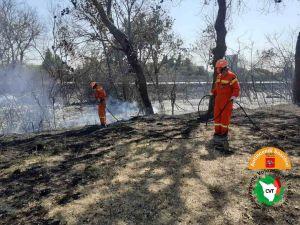 Rosignano, incendiato un ettaro di macchia mediterranea lungo l'Aurelia
