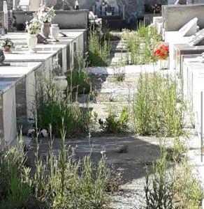 cimitero cecina