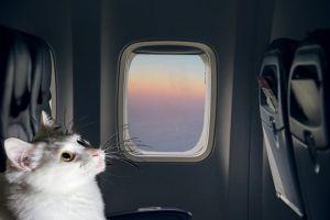 gatto aereo viaggio