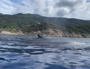 Isola d'Elba, in gommone con la balena accanto