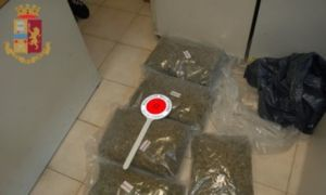 marijuana, arrestati