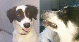 Ritrovati due cuccioli. Cercano il proprietario o una nuova casa