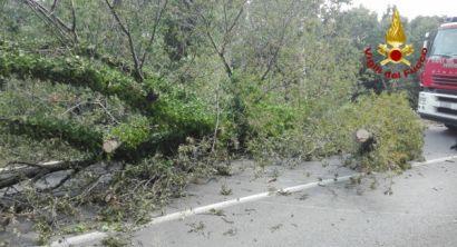 valle benedetta livorno albero caduto