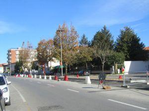 Lipu  continuano a tagliare alberi in città