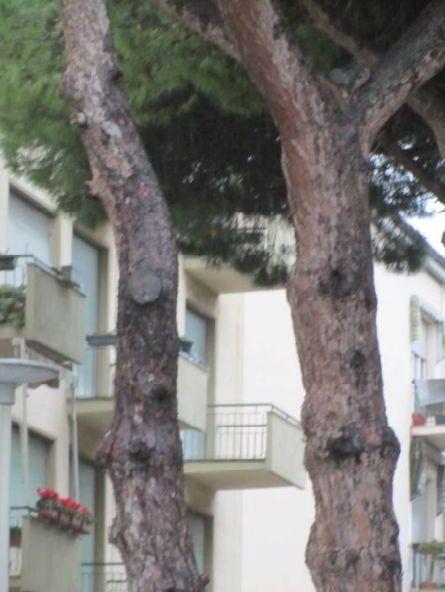 potatura alberi lipu