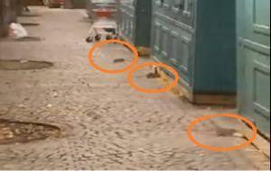 ratti in piazza garibaldi