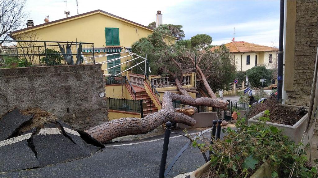 Castiglioncello albero caduto in via Torino