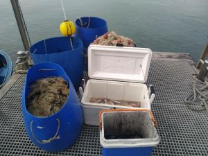 Sequestrati 800 metri di reti a pescatori non in regola