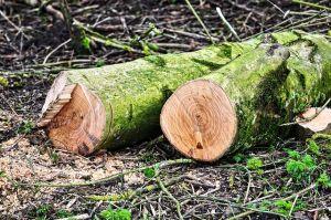 tronchi taglio alberi