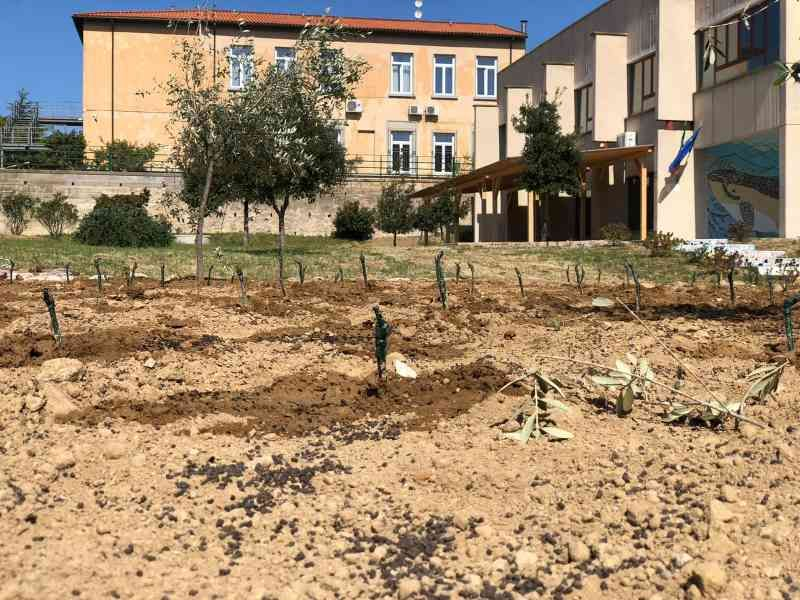 Elba nasce la vigna didattica, a scuola si insegnano le tradizioni