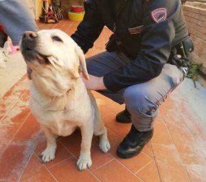 La buona notizia Non vedente smarrisce cane guida, la polizia lo riporta