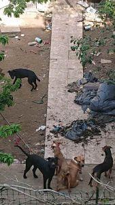 Salvati 6 cani, erano tenuti senza acqua né cibo (Foto)