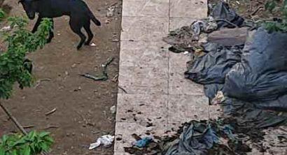 Salvati 6 cani, erano tenuti senza acqua né cibo (Foto) (2)