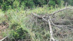 Lipu Periodo di nidificazione, fermiamo gli sfalci. Ora è il turno del fosso di Banditella