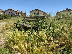 Rosignano Ripristinare la cura delle aree verdi del territorio