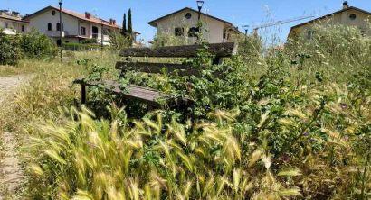 Rosignano Ripristinare la cura delle aree verdi del territorio (8)