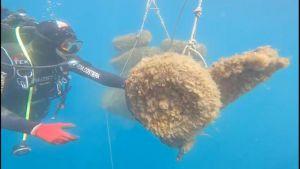 Mare e plastica: 14 tonnellate di rifiuti recuperati. L'intervento della Guardia Costiera all'isola d'Elba