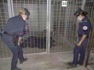 Piombino: deteneva un cane in condizioni incompatibili, denunciato dai carabinieri forestali