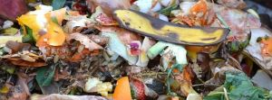 Produrre il compost nei giardini condominali, il progetto di Comune e Aamps