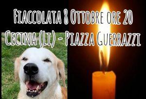 A Cecina una fiaccolata corteo per ricordare gli animali vittime innocenti