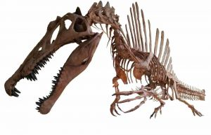 I dinosauri coccodrillo sono comparsi in Europa 150milioni di anni fa