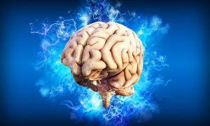 Scoperte le molecole che rendono unico il cervello umano